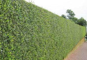 Hedge Cutting NW5